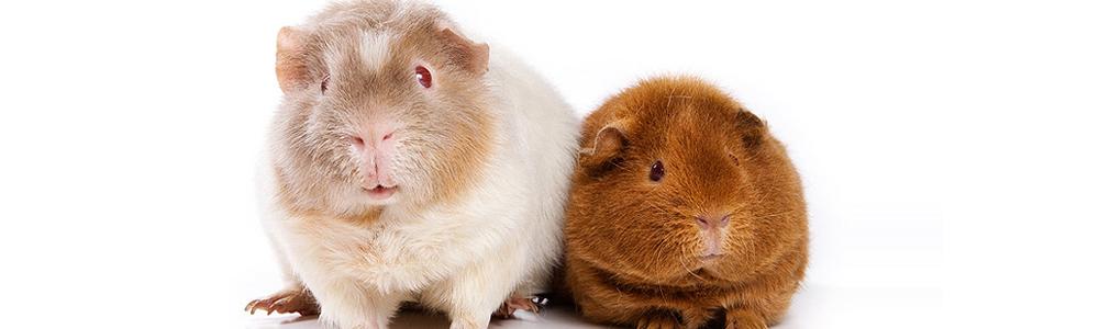Dichiarazione universale dei diritti dell'animale